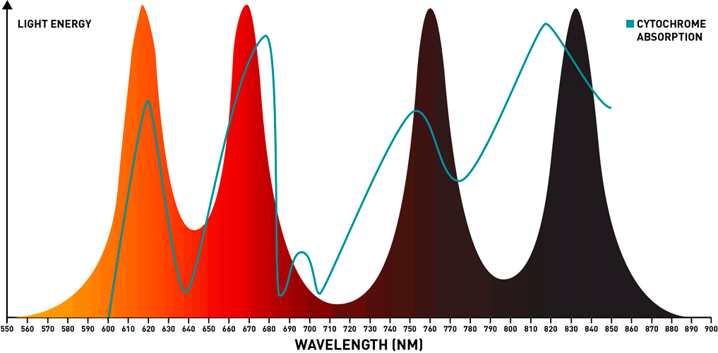 best red light therapy wave lenght