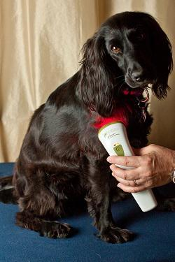 red light therapy for pets