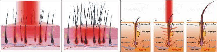 Red Light Therapy The Definitive Guide Redlight Clinic